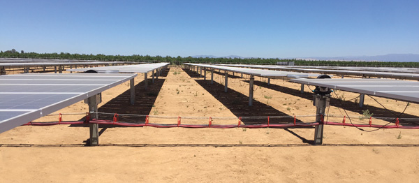 CAB Solar Wire Management in Harsh Dessert